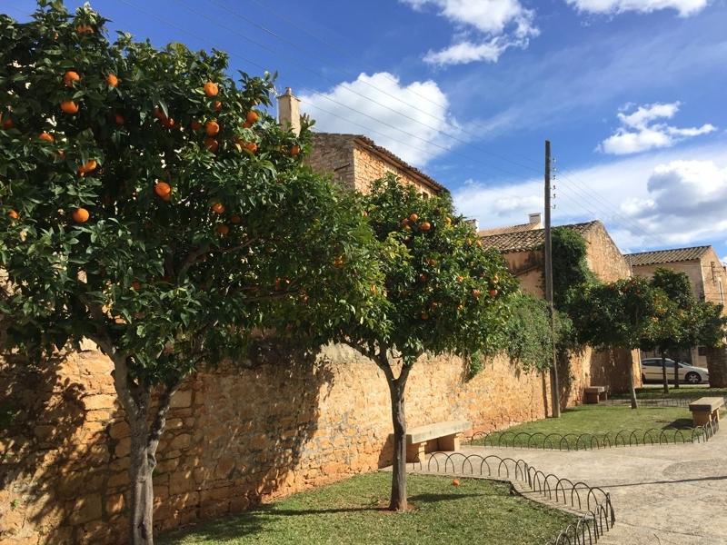 Häuser und Orangenbäume in Santanyí