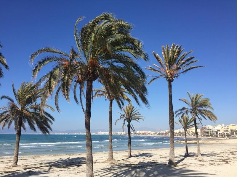 Der Strand El Arenal mit Palmen und Blick zur Playa de Palma